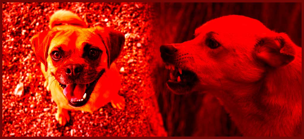 30 Second Wisdom – 2 Dogs